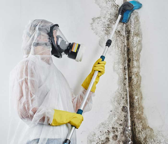 Mold Remediation 700x600
