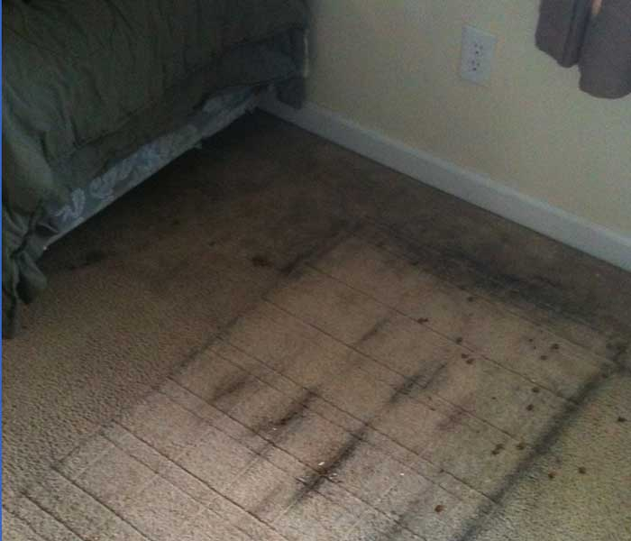 Carpet Cleaning Authorized services 700 600